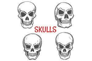 Human skulls sketches