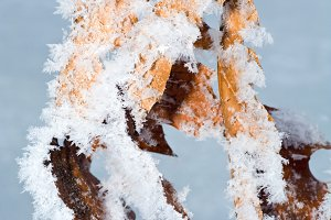 winter rime and snow covered tree
