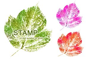 collection of stamp of leaf
