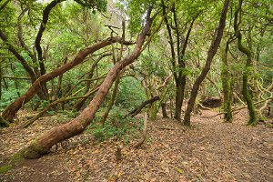 Anaga tropical forest in Tenerife