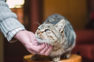 Tabby cat being scratched