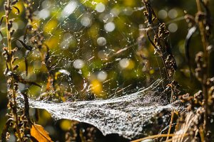 Web of autumn in the woods
