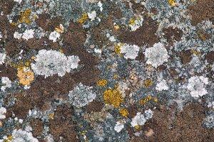 Stone Fungus Background