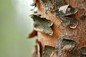 Tree Trunk Macro