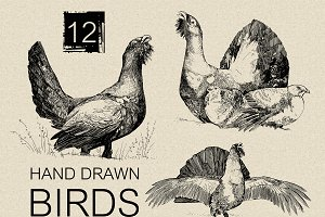 12 Hand drawn birds