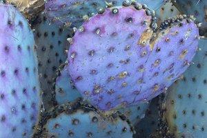 Cactus Blue Heart