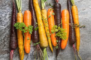 Ripe black, orange and yellow carrots with parsley and thyme. Dark stone background. Autumn harvest.