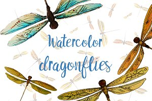dragonflies watercolor illustrations