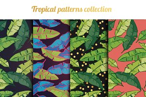Tropical palm vector patterns set