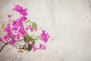 Flower blended into concrete wall