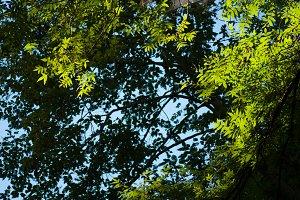 Sun,Sky,Leaves