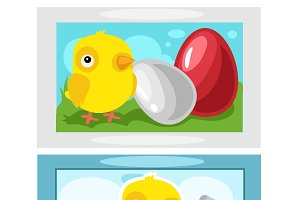 Chicken hatching from eggs,