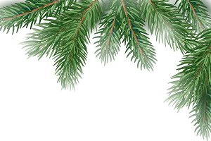 Fir Tree Branches background.