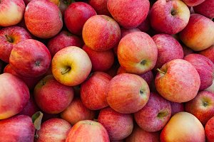 Fall Autumn Red Apple Harvest