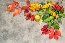 Oak and maple autumn leaves