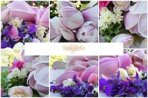 Beautiful Spring - Tasmanian blooms