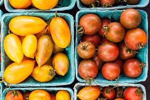 Colorful Tomatoes at the Farm