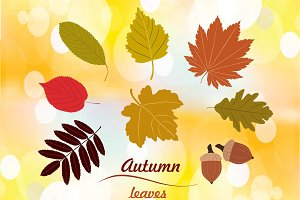 Set of autumn leaves vector