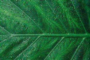 Big Plant Leaf Texture