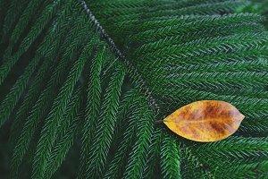 Different Leaf