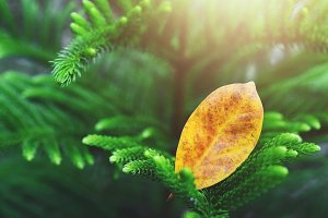 Yellow Leaf in Autumn Light