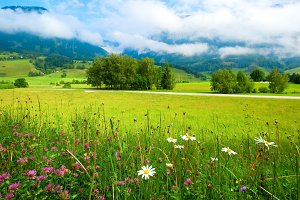 Alpine meadow flowers