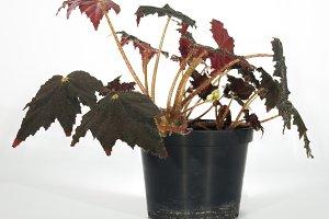 Window plant on light background
