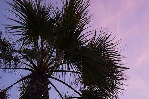 Palm Tree Silhouette on Pink Sky