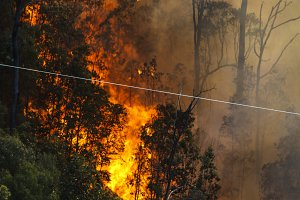 Bushfire near Power Lines
