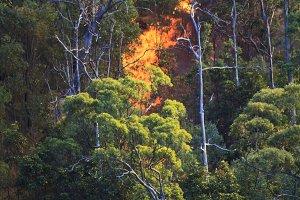 Fire in the Australian Bush