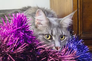 Grey Tabby Cat in Tinsel