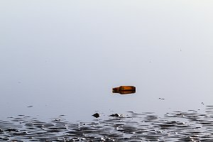 Discarded Beer Bottle in the Sea