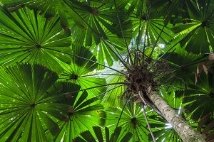 Green Fan Palm Tree Background