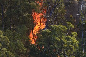 Fire Burning in Forest
