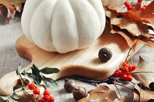 Pumpkins and gourds. Fall. Autumn