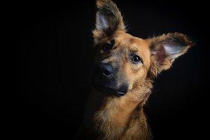 Dog portrait in black background