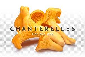 Chanterelles