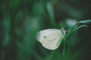 White spot in dark grass