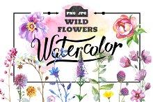 Wild Flowers watercolor PNG set