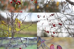 Autumn nature. 16 photo set