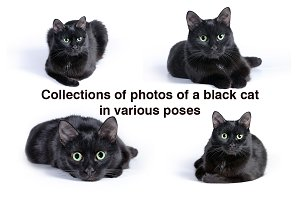 Collection of photos of a black cat