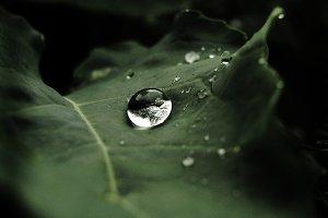 a drop on broccoli leaf