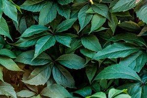 Plants background II