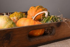Gourds and Decorative Pumpkins