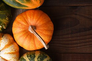 Autumn Gourds and Pumpkins