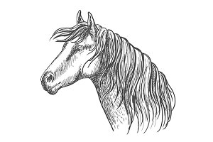 White horse with mane along neck