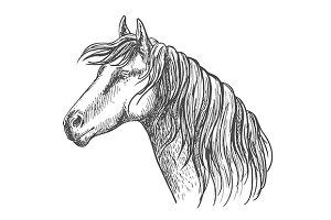 White horse with mane along neck