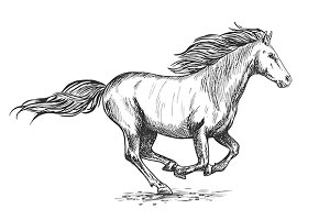 Running gallop white horse