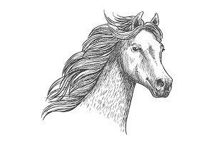 White graceful horse sketch