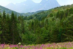 Summer North Skandinavian road
